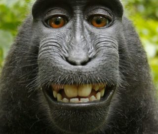 Sulawesi Monkey - Who owns the Copyright?