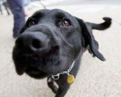 drug sniffer dog police powers